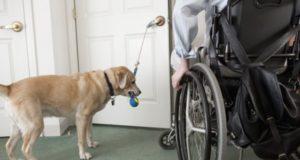 Cane addestrato per disabile