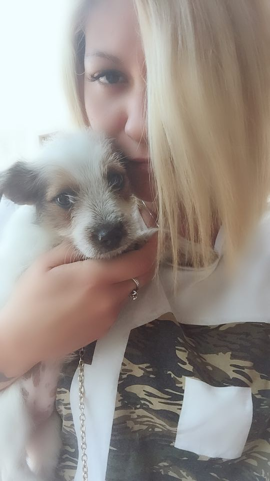 Un cane salvato da un rumeno, grazie all'intervento di una volontaria
