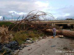 alberi caduti Regi Lagni (