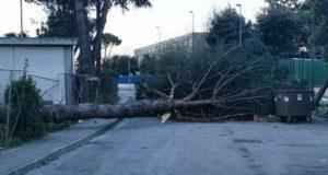 albero caduto al Parco Verde